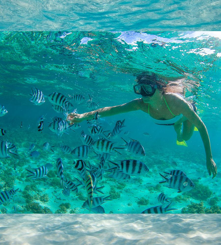 [en]Cabo Pulmo Snorkel[/en][es]Cabo Pulmo Snorkel[/es]
