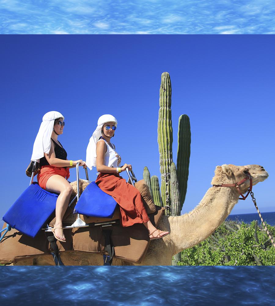 Outback Camel Safari